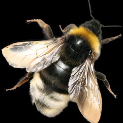 Honey_040_Bees---KOPIY.th.png