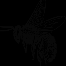 PeterM-Bee.th.png